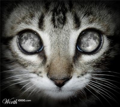 20101001195813-mooncat.jpg