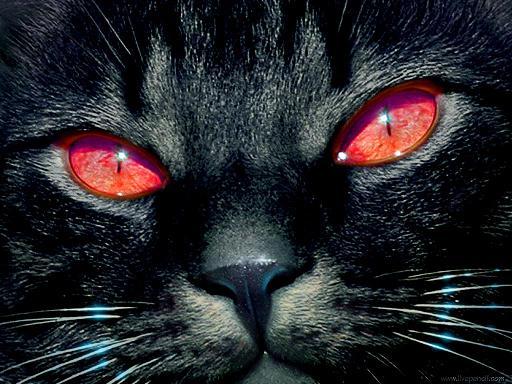 20110720073137-rey-de-los-gatos.jpg