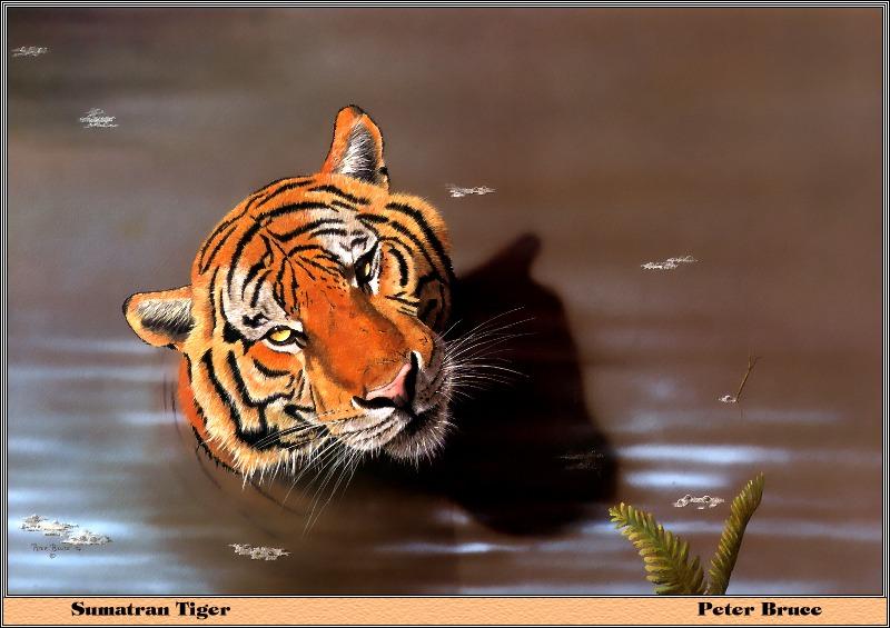 20111004080315-tiger-sumatra.jpg