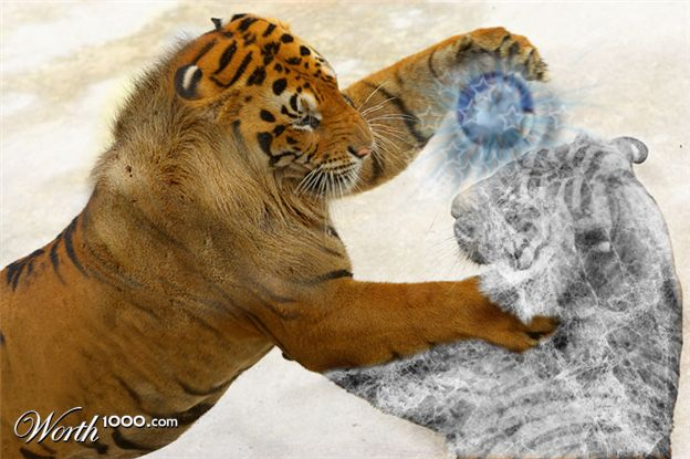 20110206103110-tigre-tigre.jpg
