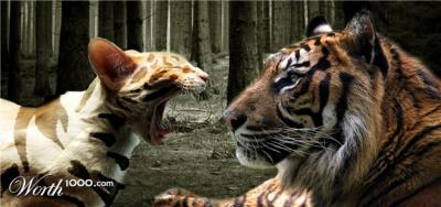 20110312202916-tigercat.jpg