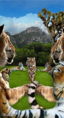20111120094914-noviembre-19-tigre.jpg