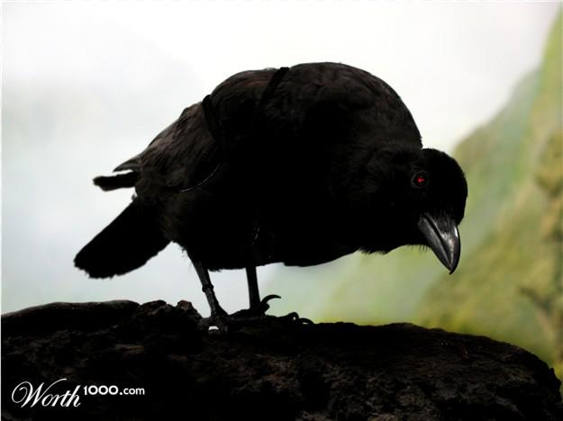 el cuervo   / minicuentos... /
