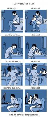 20150303203141-vivir-con-un-gato-sin.jpg